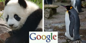 Whats The Difference Between Google Panda and Google Penguin Updates?