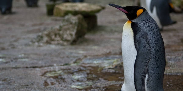 How To Overcome The Google Penguin Update